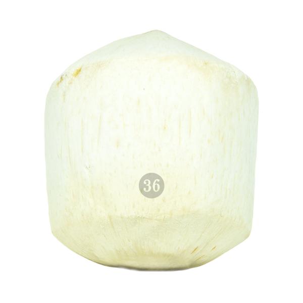 Frische Kokosnuss, 1 Stück