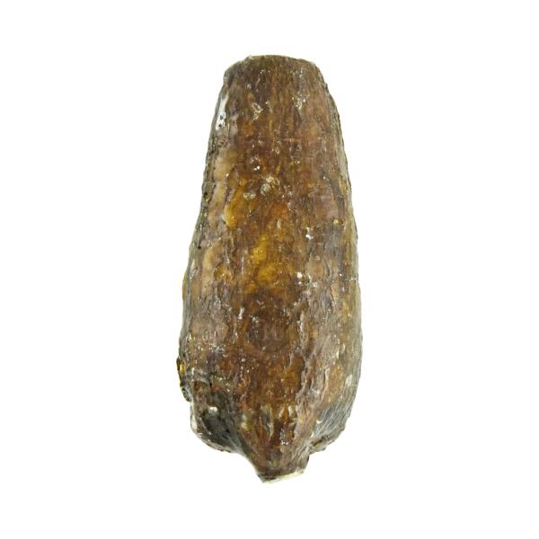 Cassava/Maniok, 1kg